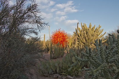 Desert Botanical Garden with glass sculpture