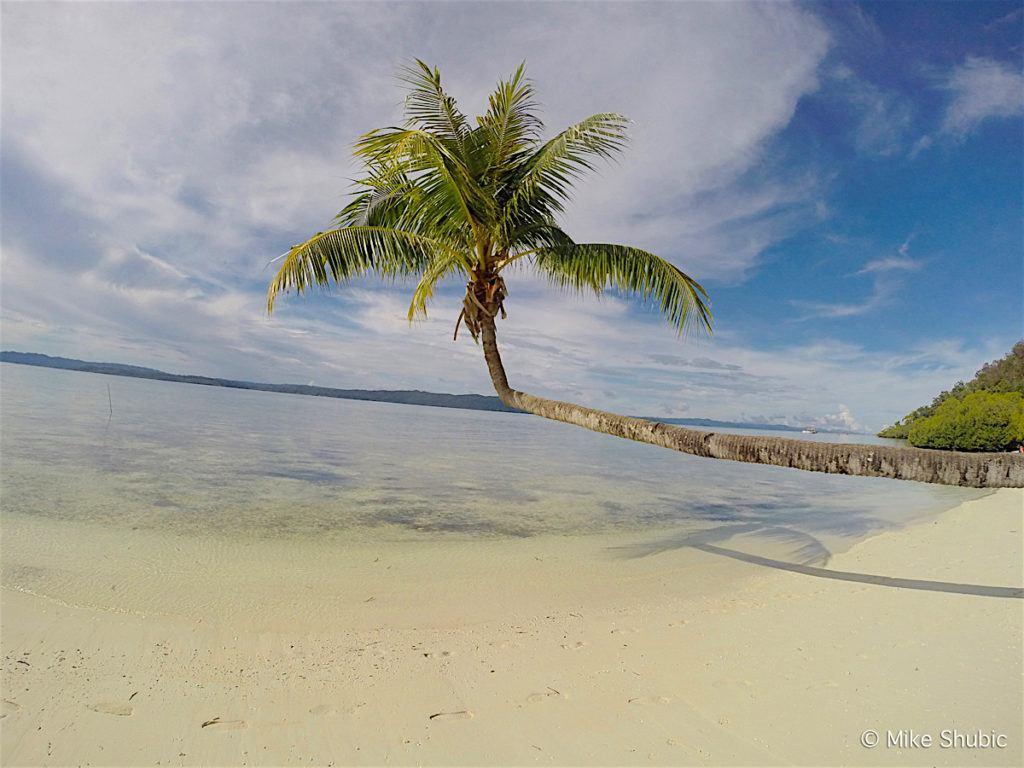 White sand beach with palm tree Raja Ampat by MikesRoadTrip.com