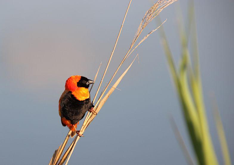 Birding at Mlilwane Wildlife Sanctuary in Swaziland