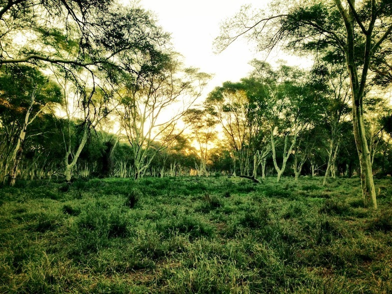 South African road trip to Kruger