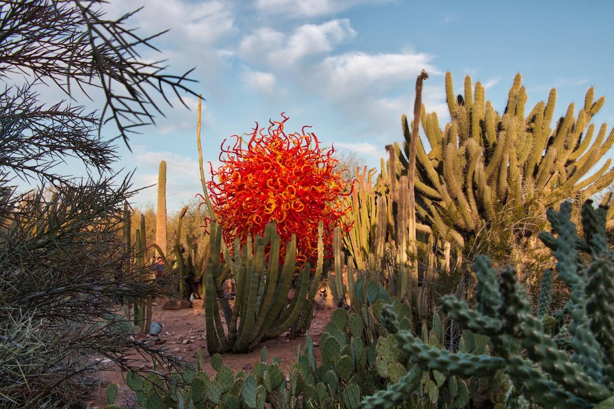 DBG Desert Botanical Garden with glass by MikesRoadTrip.com