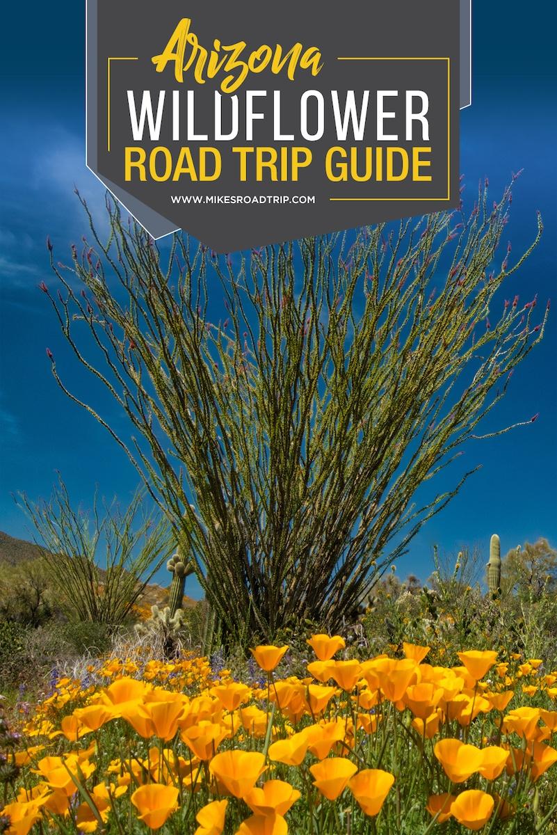 Arizona Wildflowers Road Trip Guide 1