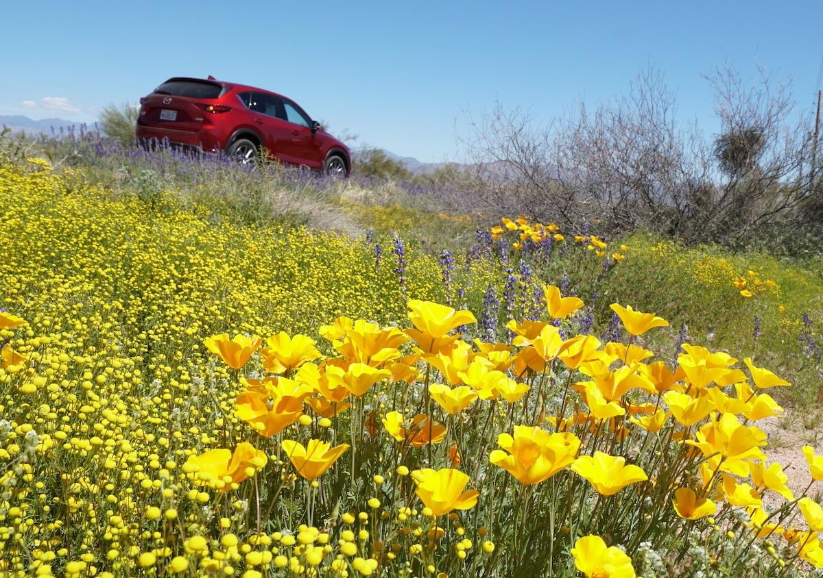 Arizona Wildflowers along Rio Verde Drive in North Scottsdale