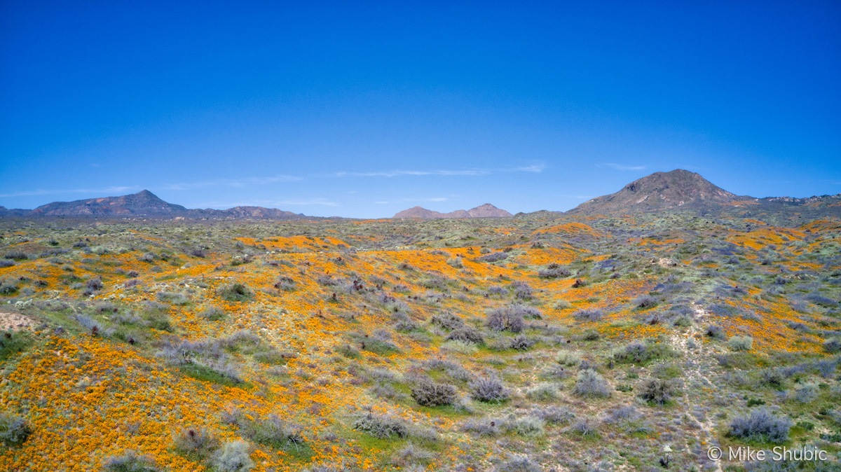 Hillside Arizona Wildflowe copy.jpg