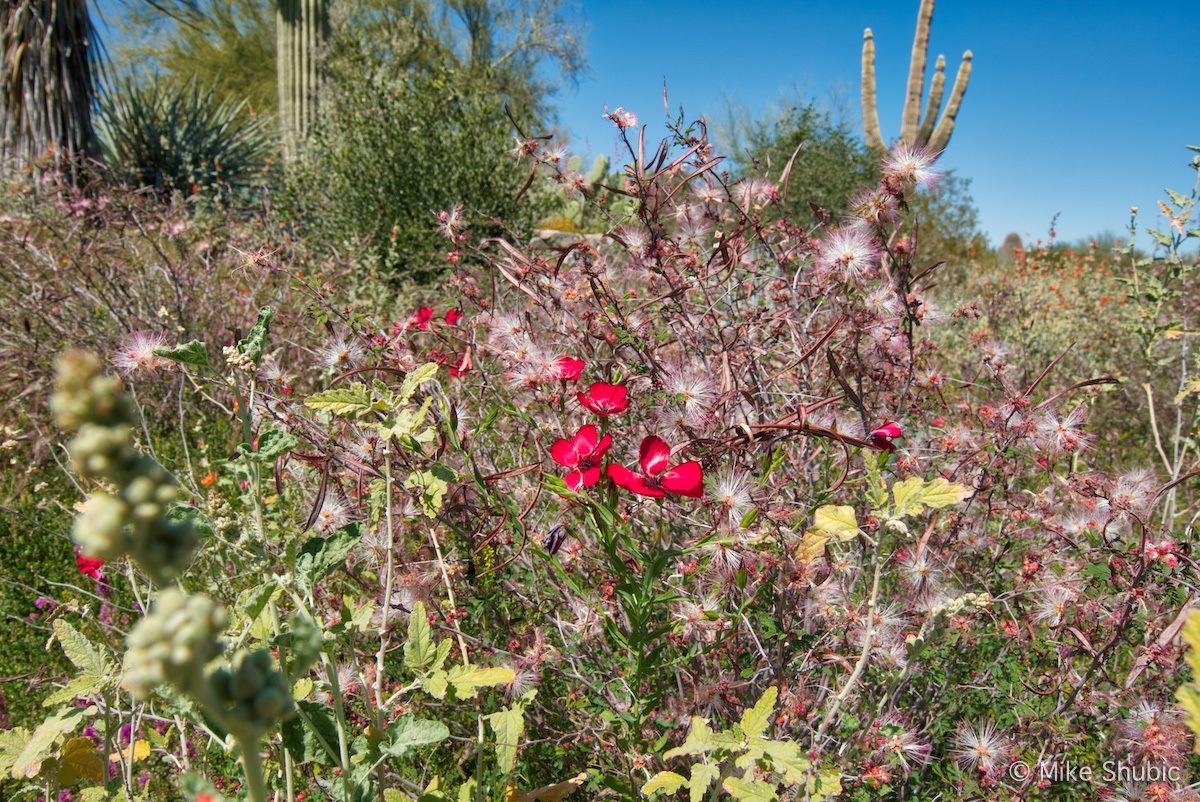 Red wildflower along Tompson Peak Parkway