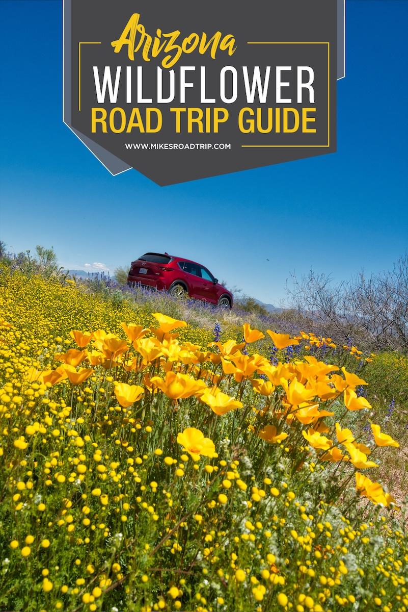 Road Trip Guide to Arizona Wildflowers 2