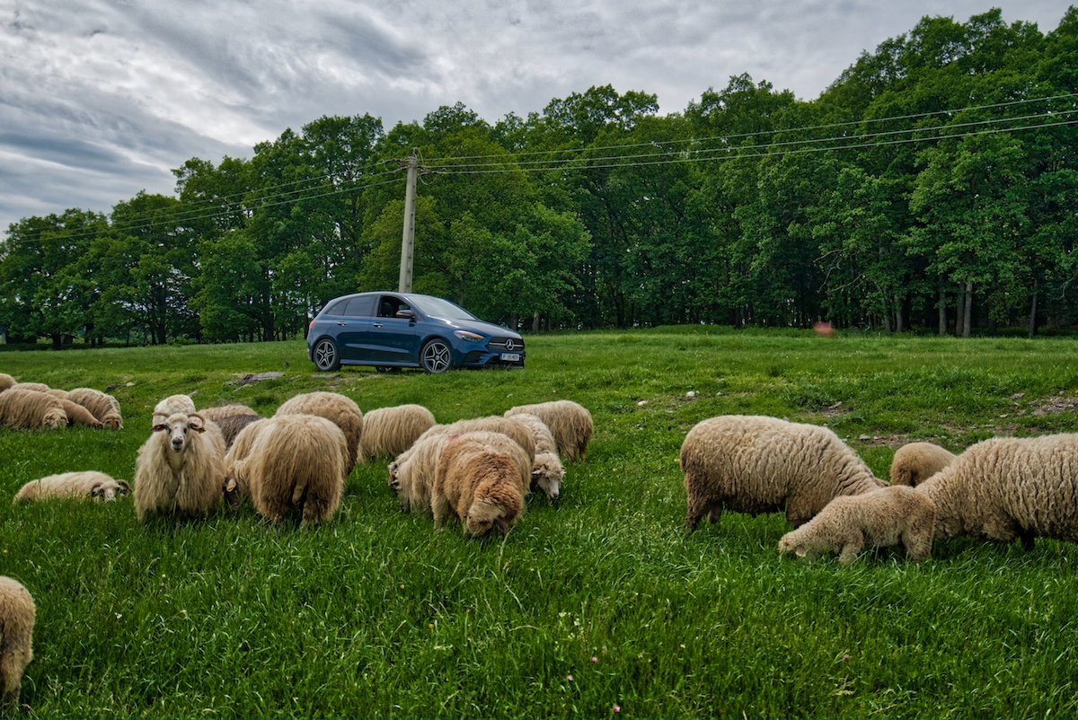 Romania Road Trip reveals lots of sheep along the roads. Photo by Mike Shubic of MikesRoadTrip.com