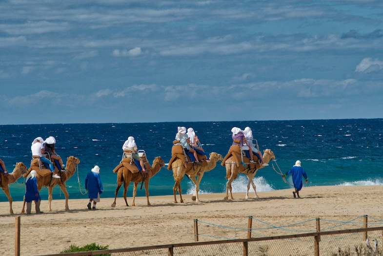 Camels on beach in Los Cabos - photo by Mike Shubic of MikesRoadTrip.com