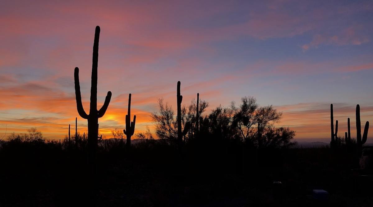 Southern Arizona road trip to Saguaro National Park - Photo by: MikesRoadTrip.com