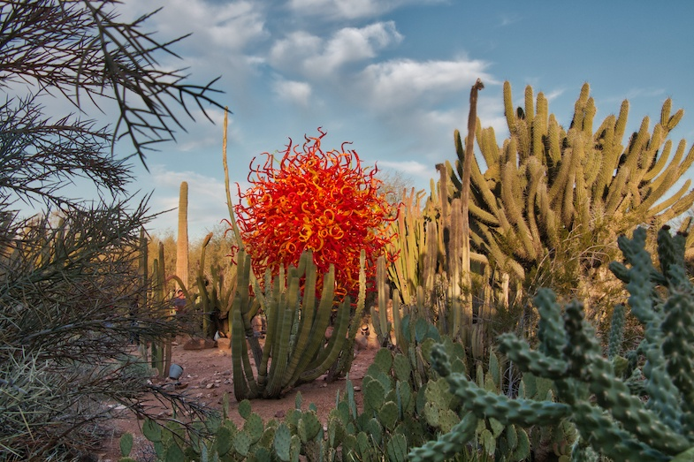 Desert Botanical Garden is one of the best places to visit in central Arizona - Photo by: Mike Shubic of MikesRoadTrip.com