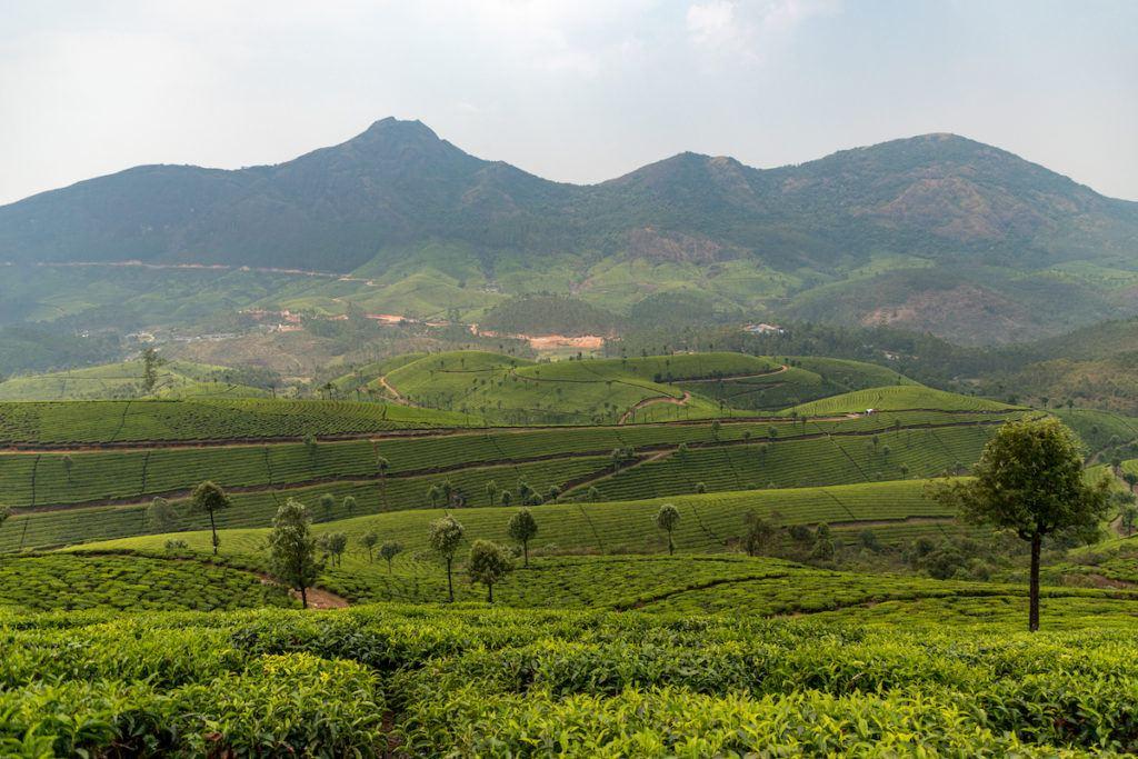 Munnar in Kerala India
